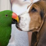 Bird fair, amateur dog-loving and pet Festival in Dueville