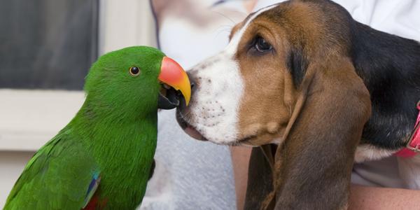 Bird fair, amateur dog-loving and pet Festival in Dueville
