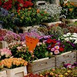 Market of herbs & flowers in Vicenza