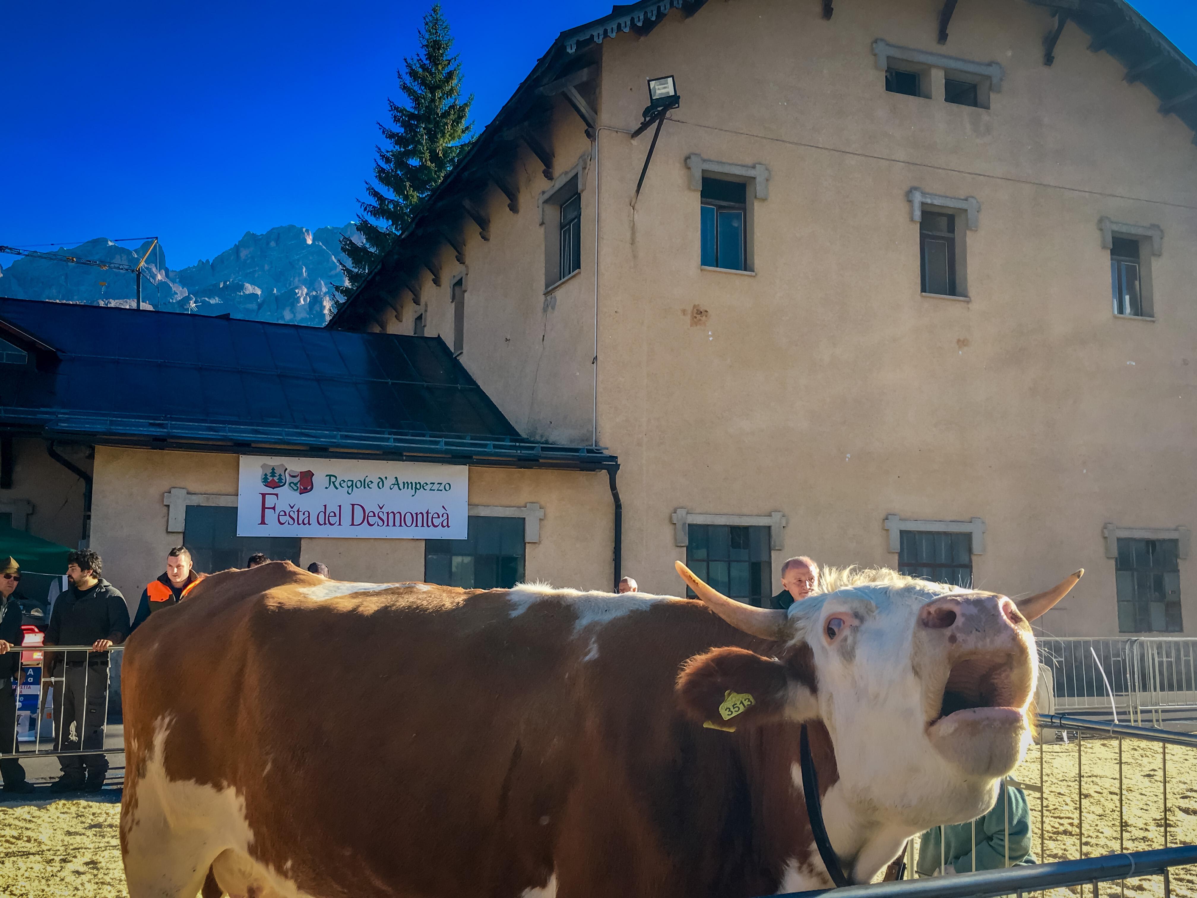 Festa del Desmontea, Agricultural Festival in Cortina d'Ampezzo in October