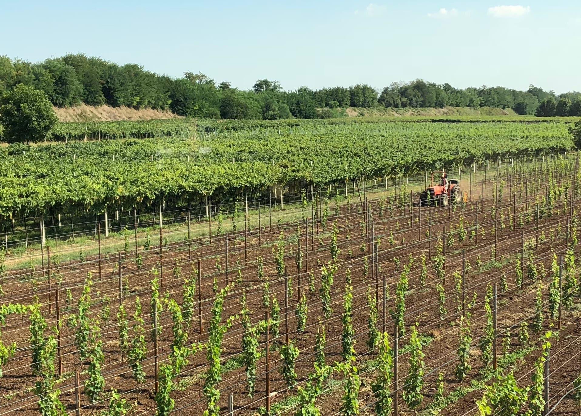 Gambellara Wine Festival at the Tenuta Grandi Winery