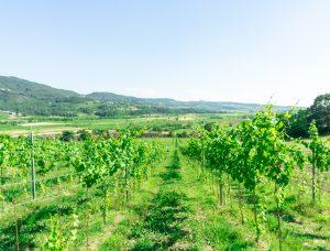Cantina San Valentino, San Valentino Winery