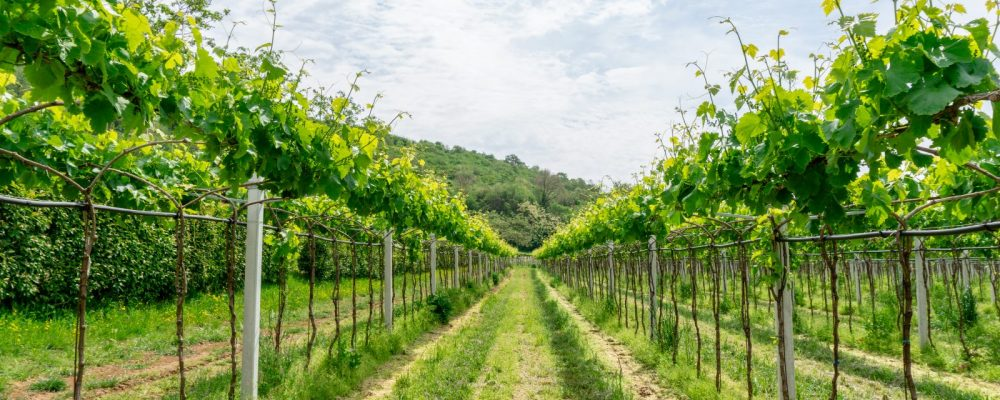 La Pria Organic Winery: Wine Tasting Experience