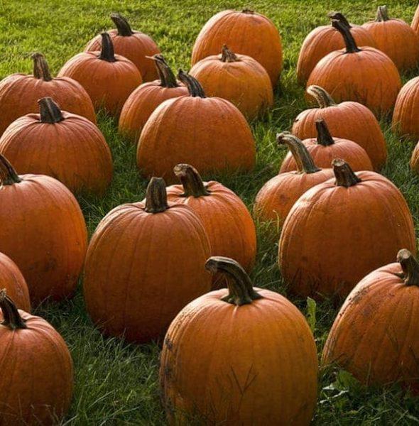 Sagra della Zucca – Pumpkin Festival in Ghizzole